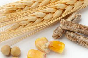 Bộ Nông nghiệp Mỹ dự báo: Ngô, đậu tương Mỹ được mùa kép