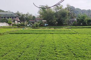 Nạo vét, khơi thông và xây kè sông Cổ Cò Quảng Nam - Đà Nẵng: Nguy cơ bờ kè phá vỡ cảnh quan, sinh thái