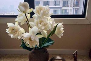 6 cách phân biệt hoa sen và hoa quỳ 'chuẩn không cần chỉnh'