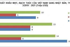 Mực, bạch tuộc Việt Nam 'nối đuôi' nhau sang Nhật Bản