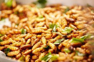 5 sai lầm khi ăn nhộng tằm bạn cần biết để đảm bảo sức khỏe cho gia đình