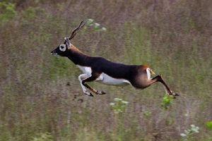 Top 10 loại động vật chạy nhanh nhất trên trái đất