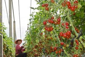 Choáng ngợp công nghệ nhà kính nông thôn tối ưu hóa sản xuất của Trung Quốc