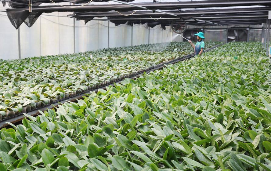 Tạo động lực phát triển hợp tác xã nông nghiệp