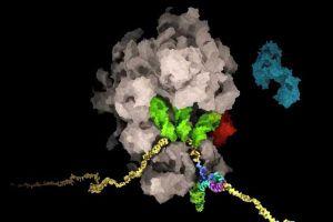 Các nhà khoa học Thụy Sĩ phát hiện ra điểm yếu quan trọng của virus SARS-CoV-2