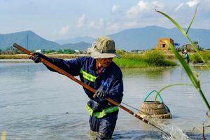 Xem nông dân Bình Định dùng 'tuyệt chiêu' bắt lươn dưới lòng sông