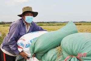 Giá lúa đầu vụ ở mức cao, nông dân Hà Tĩnh phấn khởi