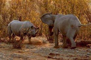 Chùm ảnh tê giác 'dằn mặt' voi rừng
