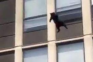 Mèo đen phi thân từ tầng 5 tòa nhà đang cháy để thoát thân
