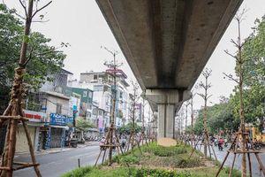 Trồng cây xanh tại dải phân cách dưới đường sắt Cát Linh - Hà Đông