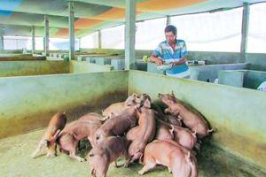 Chủ động phòng, tránh dịch bệnh trên đàn vật nuôi