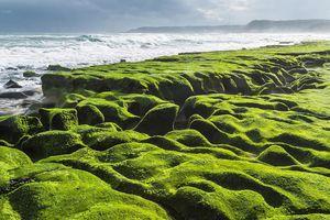 Chiêm ngưỡng bãi biển phủ đầy rêu xanh ở Đài Loan