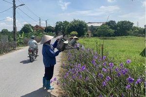 Những tuyến đường xanh, sạch, đẹp ở Gia Lâm