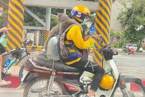Ra đường kiếm tiền cùng 'sen', chú mèo khiến cả đường phải chú ý