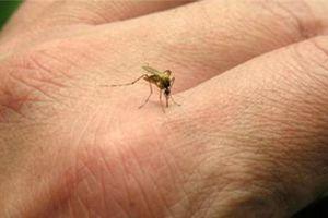Cách đơn giản phòng tránh muỗi đốt