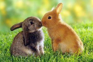 Mê mẩn trước chùm ảnh siêu đáng yêu về động vật nhỏ