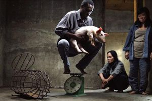 Phát hành khi chưa được phép phổ biến, nhà sản xuất phim 'Vị' bị xử phạt