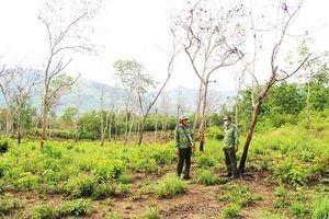 Lấn chiếm đất rừng căm xe Ninh Tây