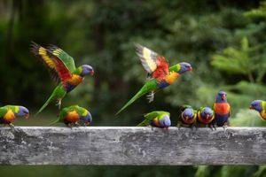 Số chim trên thế giới nhiều gấp 6 lần số người