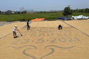 Giới trẻ Nghệ An 'phát sốt' khẩu hiệu hưởng ứng ngày bầu cử trên sân phơi lúa