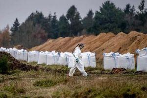 Đan Mạch đào mộ hàng triệu con chồn chết vì COVID-19 để tiêu hủy lại