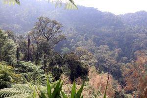 Giữ gìn kho báu rừng nguyên sinh ở khu vực Trung Trường Sơn