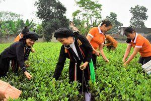 Hưởng ứng 'Ngày Chè thế giới' của Thái Nguyên