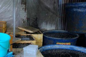 TPHCM: Phát hiện cơ sở ngâm 1,8 tấn ốc trong hóa chất