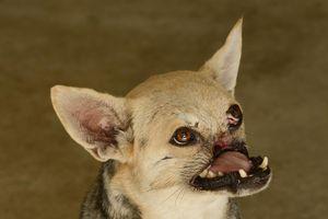 Chú chó liều mình cứu người ở Philippines 10 năm trước đã qua đời