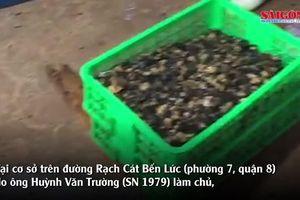 'Đột kích' cơ sở kinh doanh ốc, phát hiện gần 2 tấn ốc ngâm hóa chất độc hại