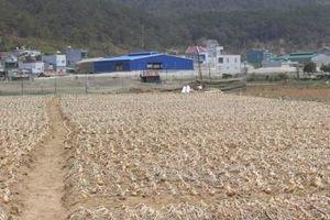 Rút dự án Khu công nghiệp nông nghiệp Tân Phú ra khỏi danh mục kêu gọi đầu tư