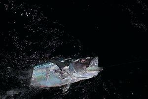 Trải nghiệm thú vị khi săn cá đêm trên biển Trường Sa