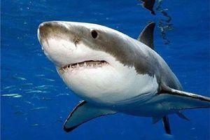 Những sự thật thú vị về loài cá mập