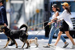 Emily Ratajkowski khoe body nóng bỏng dắt thú cưng đi dạo phố