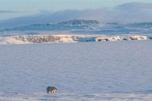 Khả năng băng Bắc Cực biến mất cao gấp 10 lần