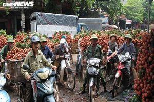 Vùng vải 12.000 tấn 'không COVID-19' ở Bắc Giang
