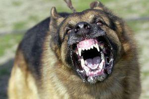 Bản tính 'cắn con mồi đến chết' của chó dữ và cách cứu nạn nhân