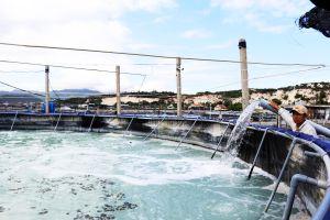 Nuôi tôm trên bạt ở Vạn Ninh: Kiểm soát việc khai thác nước ngầm