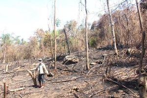 Xử lý thực bì, ban quản lý rừng phòng hộ... đốt luôn rừng tự nhiên (Kỳ cuối: Chủ tịch UBND tỉnh Quảng Nam chỉ đạo làm rõ)