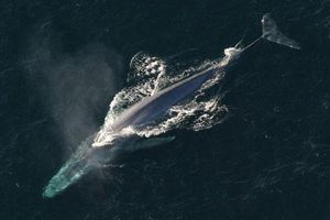 Những động vật nào 'siêu to khổng lồ' nhất thế giới?