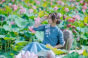 Quảng Trị: Sen hồng đang mùa nở rộ, bạn đã chụp bộ ảnh 'sống ảo' nào chưa?