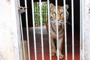 Nghệ An: Kêu gọi triệt để chấm dứt tình trạng buôn bán, nuôi nhốt động vật hoang dã trái phép