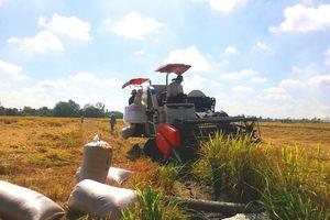 Điều tra chi phí, giá thành sản xuất lúa vụ Hè Thu 2021