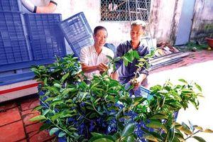 Quyết tâm xây dựng nông thôn mới nâng cao