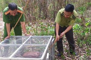 Phát hiện thêm một hộ dân nuôi nhốt kỳ đà vân quý hiếm ở Đắk Nông