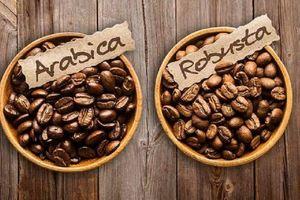 Chuyện về cây cà phê ở Ba Vì (Bài 1): Người đầu tiên trồng cà phê trên núi Ba Vì