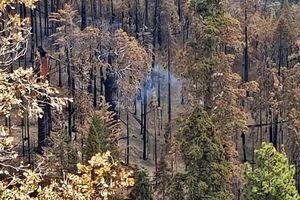 Cây cổ thụ ở Mỹ vẫn bốc khói âm ỉ sau gần 1 năm cháy rừng