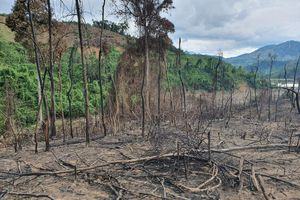 Xử lý nghiêm vụ đốt thực bì làm cháy 20 ha rừng ở Phước Sơn