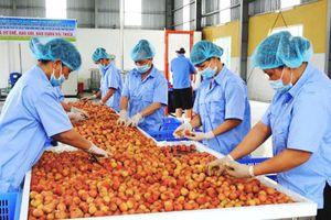 Ảnh hưởng nặng nề của dịch Covid-19, ngành nông nghiệp vẫn xuất siêu 3,27 tỷ USD