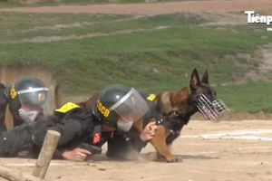Cận cảnh chiến binh đặc biệt 'săn' tội phạm